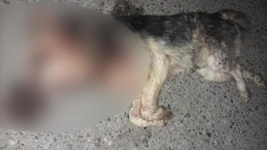 Շան վրա կրակողը ներկայացավ ոստիկանություն